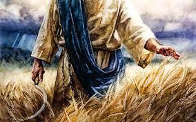 Morning Prayer: 23 Oct – Revelation 14:14-16 ~ harvest time – The Peanut  Gallery